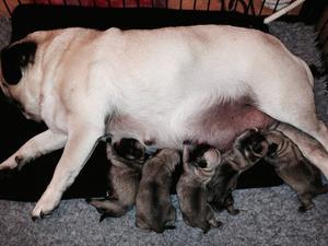 mum and new borns