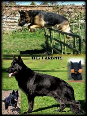 THE PARENTS