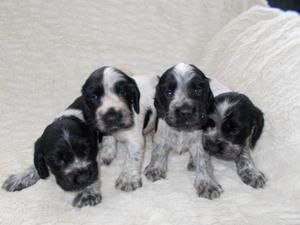 our four lovely boys