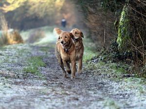 the girls love to run