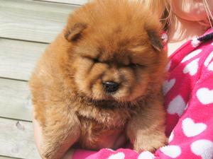 pup at 6 weeks