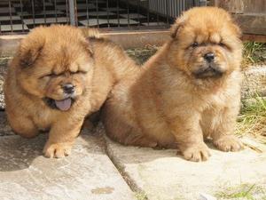 pups at 6 weeks