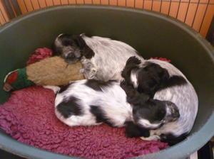 Pups at 10 weeks