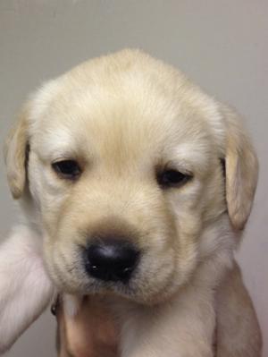 Rosie's puppy