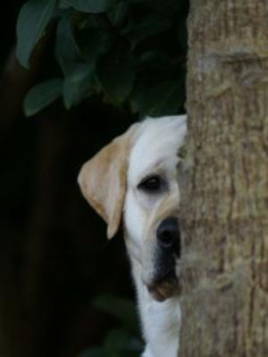 'Peek-a-Boo'