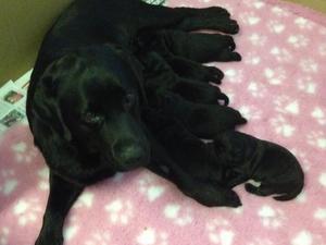 Ria & pups