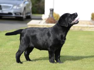 Ria's pup Jenny