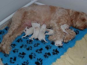 Verdi & pups