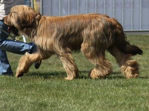 Ikkon as a puppy