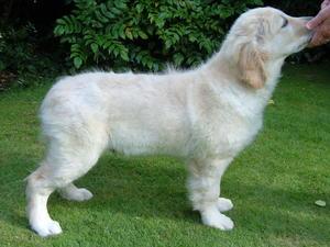 Bertie at 15 1/2 weeks