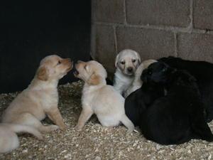 Pups at 5 weeks