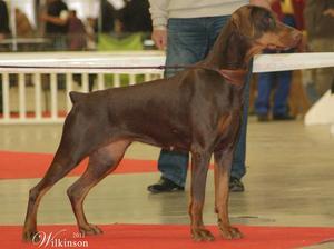 CAC CACIB Best Female - Paris Int.Dog Show 2012