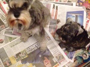 Mum and dog pup