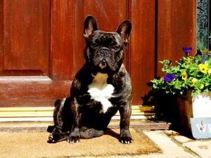 Ernest in the garden