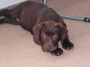Annie as a puppy