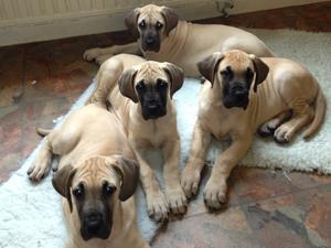 Pups at 8 weeks