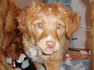 Dooley (d.o.b.12/12/2012)