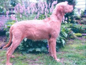 Ginger Lillie Around Oakberrow