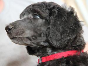Pup at 5 weeks