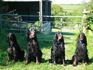 Millie, Rohan, Ollie & Lottie (3 Generations)