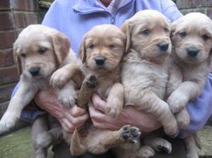 3 Pups at 4 weeks