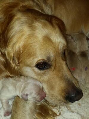 Honey cuddling newborn boy