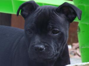pup at 9 weeks