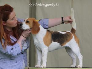 Aggie Beagle Club '16