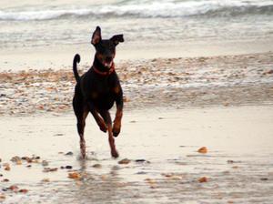 Buka at the beach