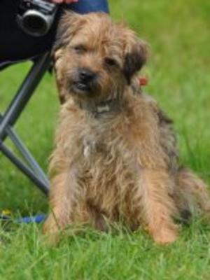 Mum, Betty as a pup herself