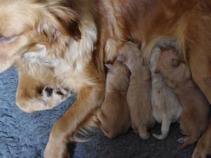 New born pups