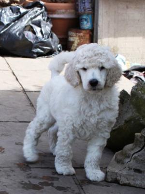 Puppy @ 7 weeks