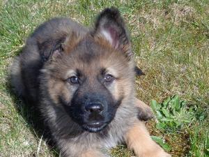 last dog pup