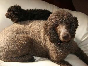 Tolerant of Sacha's puppies:)