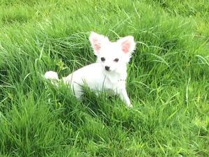 Ludo in the grass
