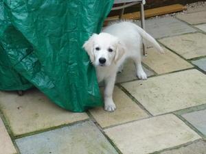 cheeky puppy!