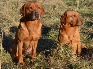 Geordie & Duffy (Mum&Dad)