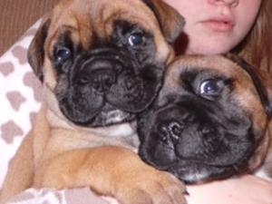 pups from 1st litter