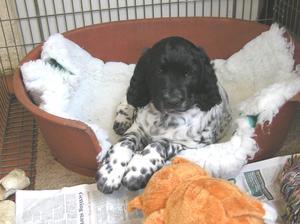 Alfie 7 weeks