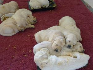 Yep, they fell fast asleep in the feeding trays !