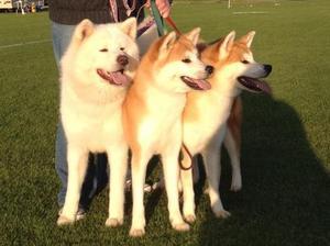 Tycon Trio