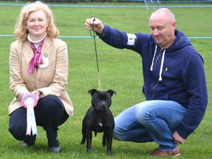Best Puppy Bitch at Darlington 2013 Dr A Paloheimo