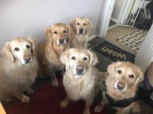 Our 5 Golden children
