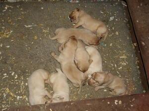 puppys 10 days