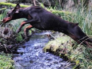 A very athletic Ella