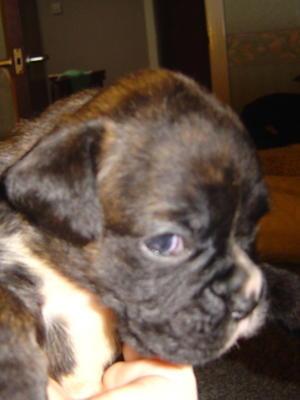 Puppy Xena