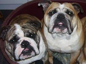 Bertie and Minky