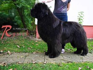 El Perro Askado (father)