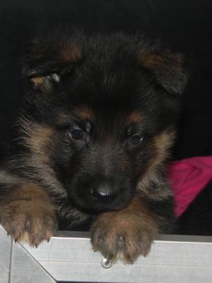 little boy pup