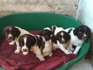 Puppies at 4 wks